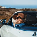 Auto Insurance Explained: How Does Car Insurance Work?